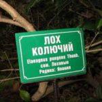 Сервис Rf-promotion.ru - лохотрон