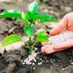 AgroMax - стимулятор роста. Лохотрон